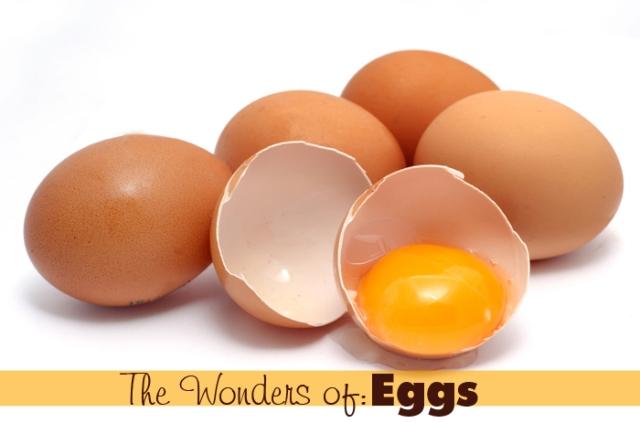 the wonders of eggs